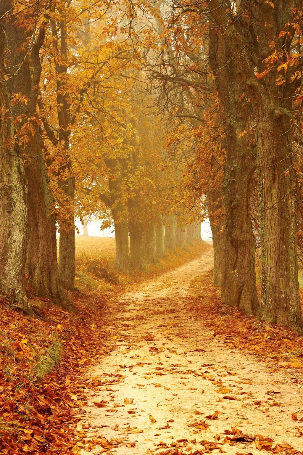 Autumn_photographytips